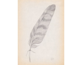 Feather II - A5 Giclee print