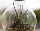 Light Bulb Terrarium - Modern Design Meets Nature
