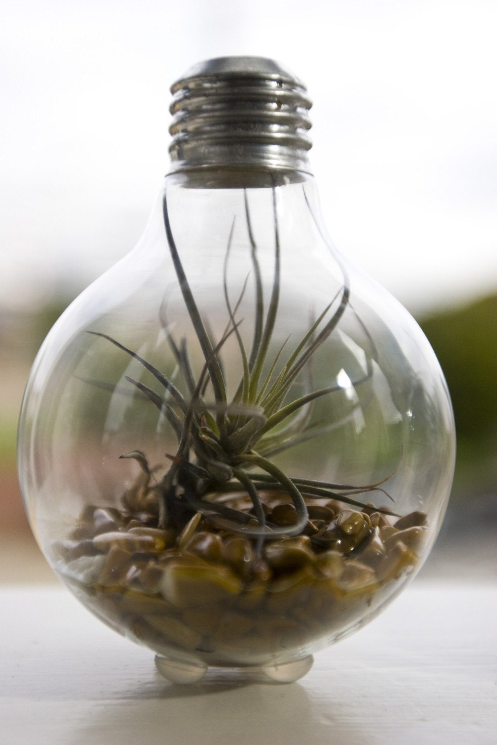 Light Bulb Terrarium Modern Design Meets Nature