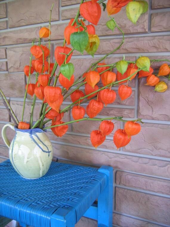 CHinese JAPANESE LANTERNS Dried Stems flowers ORANGE 15