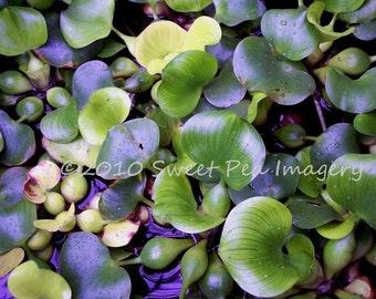 Vagabond for Genesis - Beautiful Green Plant Life 8x10 Photographic Print