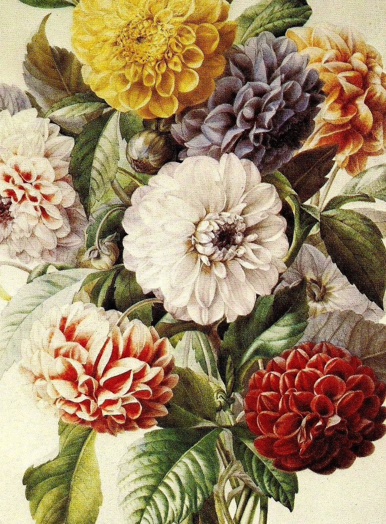 Dahlias & Roses 2 Vintage Botanical Illustrations 1978