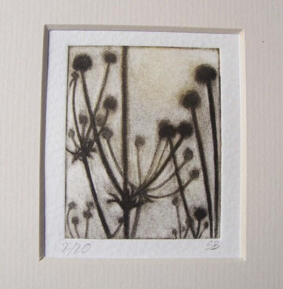 Japanese anemone seed heads Original print