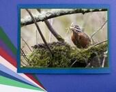 Robin Mama Building Nest - Handmade Photo Greeting Card