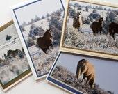 Wild Horses of Oregon - Set of 4 Handmade Photo Greeting Cards