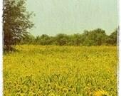 Sunflower Field - 8x10 Fine Art Photograph
