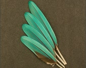 Buffons Macaw Parrot Aqua Teal Turquoise Blue Green Quill Wing Feathers to 6 1/4 inches