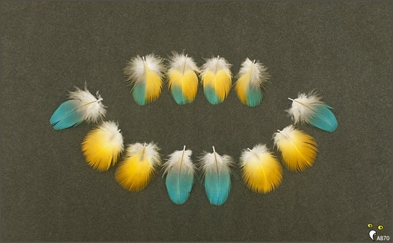12 Macaw Parrot Body Feathers Blue Yellow and BiColor Assortment to 1 3/4 inches