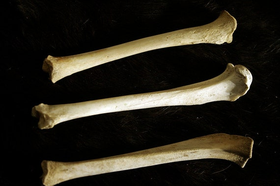 Real Leg Bones