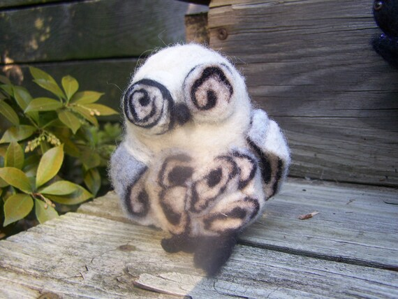 crazy eyed owl