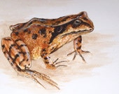 Original Frog watercolour painting REDUCED PRICE