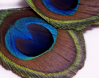 Trimmed Peacock Feather Earrings