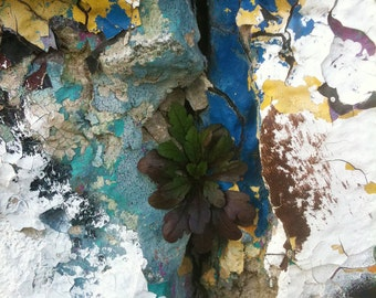 Urban Growth and Decay
