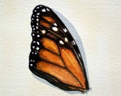 Monarch Wing 2 - Original Watercolour - Nightly Study Jan 18th