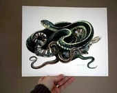 Study of snakes - Original Watercolour study - Nightly Study 303 Jan 4th