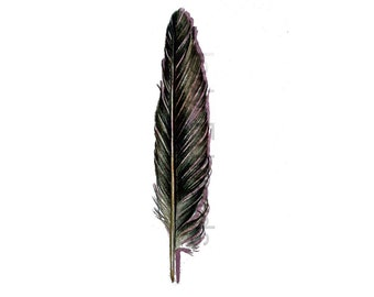 Black Crow Feather - Original Watercolor - Nightly Study 397