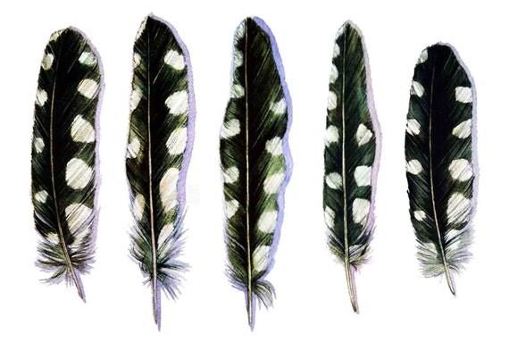 Five Woodpecker Feathers Art Card