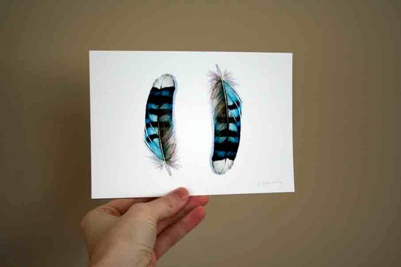 Two Blue Jay Feathers - Small Archival Print