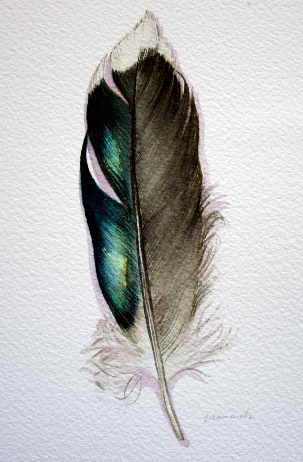 Original Watercolor Feather Study 177 Mallard feather from