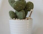 Woollen (knit) Prickly Pear Cactus in Ceramic Pot