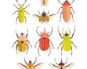 Art Print - Beetle Identification Chart