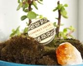 Comfrey (Symphytum x uplandica) Salve-Organic & Handcrafted 1oz