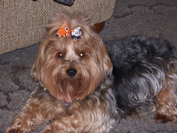 TN Vols Dog or Pet Grooming Bow with a Latex Rubber Band, French Barrette or Alligator Clip  in TN Orange, Black and White
