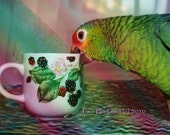 6x4   I'm An Animal Until My 1st Cup of Coffee - Parrot - Fine Digital Art Photography - FREE SHIPPING