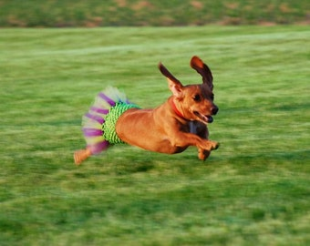 Create Your Own Dog Tutu - Fits Dogs 13 To 23 Inches Around