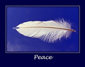 White Feather Photo, 10x8 matted to 14x11, Peace, Inspirational Message