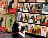 Black Cat Art Greeting Card, Chat Noir, Blank Notecards, Crazy Cat Lady, Cat Lover Gift, Blank Card, Cat Art by Deborah Julian