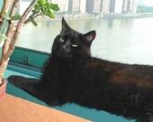Black Cat Art Print- Lazy Afternoon Large Size Print