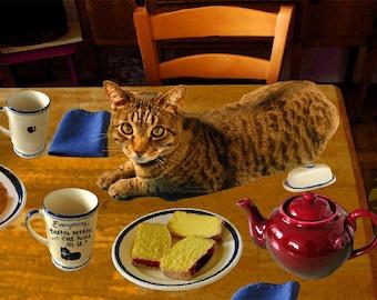 Cat Cards, Blank Note Cards, Funny Greeting Cards, Handmade, Cat Hair, LOL Cats, Cat Note Card, Deborah Julian