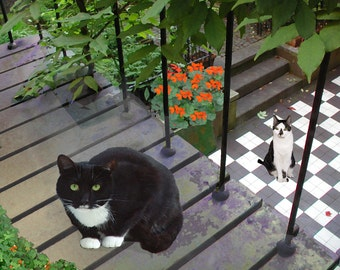 Tuxedo Cat, Blank Cards, Cat Lovers, Cat Greeting Cards, Photo Note Cards, Notecards, Cat Artwork, Deborah Julian