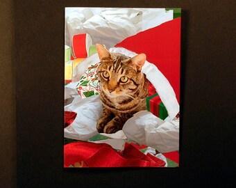 Set of 5 Cat Christmas Cards, Santa's Cat in a Sack, Designer Cat Artwork Bargains by Deborah Julian