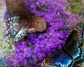 Fly Away Butterfly Fine Art Print 8x10