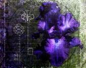 Purple Iris Digital Collage Fine Art Print 8x8