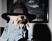 Norwich Terrier, Gangster Dog ,digital photo, noir photo, dog humor, wall art, home decor, dog art, gift for dog person, dog in hat,