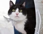 Cat In A Bag, digital photo, art for pet lovers,  kids room, office or den art, cute animal art, vet gift