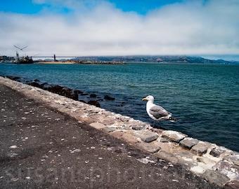 San Francisco, Bird and Ocean View, digital Photo, wall art, home decor, office art, corporate art,