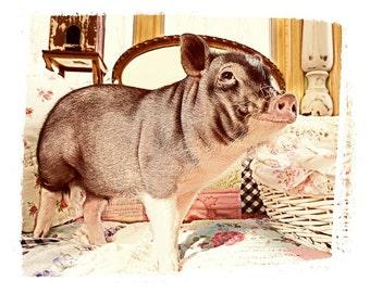 Happy Pig, fine art photo, wall art, children's room art, home decor, humor art, funny art, potbelly pig photo