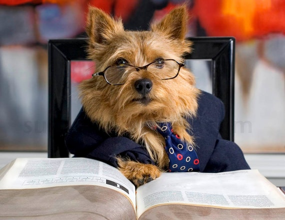 Norwich Terrier  Reads Book, fine art photo for pet lovers, home decor, kids room, living room, playroom,