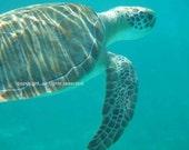 Fine Art Photo Turtle Caribbean Greeting Card