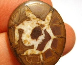 Septarian Nodule Cabochon RARE Incredible Awesome Fossilized Sea Stuff