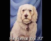 16x20 Pet Portrait - Oil on Canvas by Maria Burd