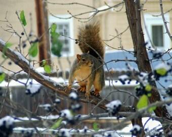 Squirrel     Item P-7