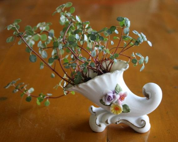 Tiny Ceramic Flower Pattern Cornucopia Planter with Live Miniature Plant Red Stem