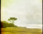 Half Moon Bay fine art photograph 8x8 Seaside Bokeh Square Image Large Cypress Tree in Seaside Landscape