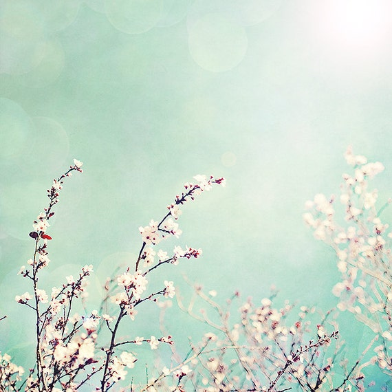 summer sky - 8x8 fine art photograph cherry blossoms with a touch of sun flare and bokeh turquoise teal blue white pink