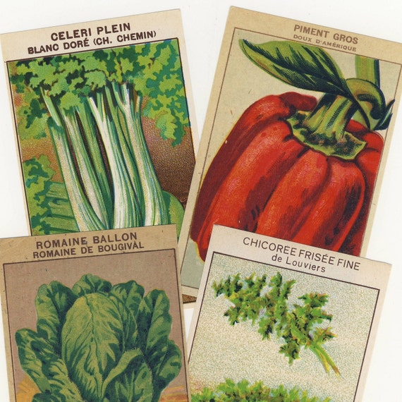 Vegetable Packet Labels Vintage French 24 All Different  - Set A
